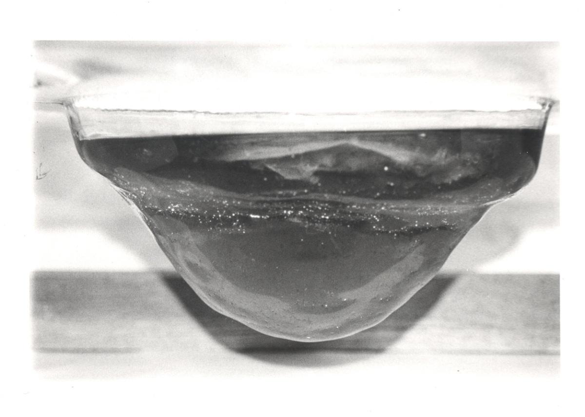Kombucha Scoby (Art) Experiment