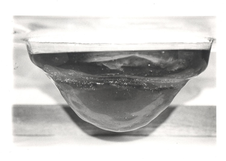 Kombucha scoby in thermoformed glass sculpture