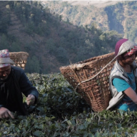 How This Cup of Tea Will Make the Life of a Whole Village More Prosperous